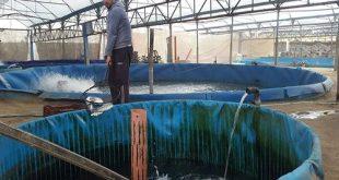 d-alayyam-278-اخبار-فلسطين-غزة-توسع-لافت-في-مشاريع-الاستزراع-السمكي